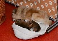Выставка собак DogLand, Фото: 31