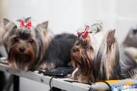 Всероссийская выставка собак 2017, Фото: 19