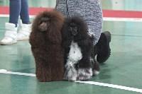 Выставка собак в Туле 26.01, Фото: 43