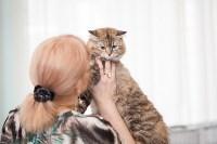 Международная выставка кошек. 16-17 апреля 2016 года, Фото: 68