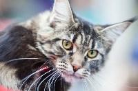 Выставка кошек в МАКСИ, Фото: 48
