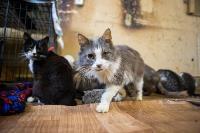 Волонтеры спасли кошек из адской квартиры, Фото: 44
