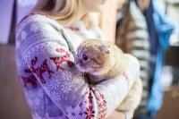 В Туле прошла выставка «Пряничные кошки» , Фото: 89