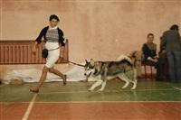В Туле прошла всероссийская выставка собак, Фото: 35