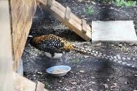 Обитатели мини-зоопарка Детского парка Новомосковска., Фото: 6