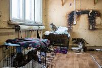 Волонтеры спасли кошек из адской квартиры, Фото: 67