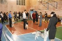 В Туле прошла всероссийская выставка собак, Фото: 45