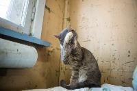 Волонтеры спасли кошек из адской квартиры, Фото: 88