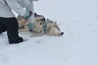Праздник северных собак на Куликовом поле , Фото: 90