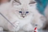 """Выставка """"Пряничные кошки"""". 15-16 августа 2015 года., Фото: 60"""