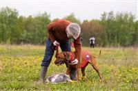 В Туле состоялись собачьи бега, Фото: 26