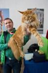 Выставка кошек в ГКЗ. 26 марта 2016 года, Фото: 101