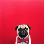 Фотогеничный пес Норм из Сиэтла, Фото: 12