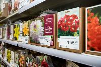 Какие семена выбрать и как правильно ухаживать за рассадой, Фото: 61