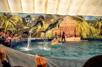 Шоу карибских дельфинов, Фото: 8