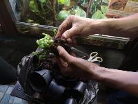 Укротитель хищных растений Сергей Куницын, Фото: 3