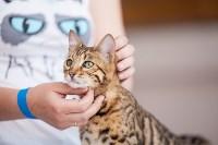 """Выставка """"Пряничные кошки"""". 15-16 августа 2015 года., Фото: 88"""
