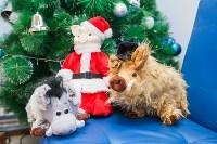 Кондитерград: Готовим сладкие подарки к Новому году, Фото: 54
