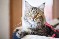 Международная выставка кошек. 16-17 апреля 2016 года, Фото: 11