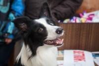 Всероссийская выставка собак 2017, Фото: 10