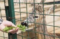 Зоопарк на набережной Упы в Туле, Фото: 12