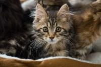 Выставка кошек в ГКЗ. 26 марта 2016 года, Фото: 6