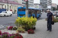 Деревья на проспекте Ленина, Фото: 27