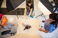 """Выставка """"Пряничные кошки"""". 15-16 августа 2015 года., Фото: 132"""
