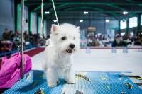 Выставка собак в Туле, Фото: 126