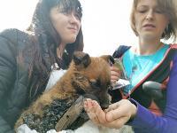 Туляки спасли погибавших в битуме щенков, Фото: 21