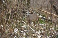 Зимовка зверей в Белоусовском парке, Фото: 9