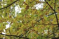 Осень, Фото: 32