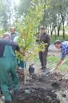 В Пролетарском районе высадили молодые деревья, Фото: 18