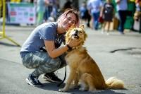В Центральном парке Тулы проходит фестиваль помощи животным, Фото: 11