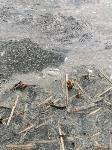 В пруду поселка Октябрьский в Туле из-за загрязнения гибнет рыба, Фото: 5