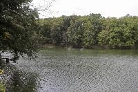 Туляки сообщают о массовой гибели уток в Платоновском парке, Фото: 5