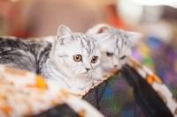 """Выставка """"Пряничные кошки"""". 15-16 августа 2015 года., Фото: 80"""