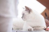 """Выставка """"Пряничные кошки"""". 15-16 августа 2015 года., Фото: 20"""
