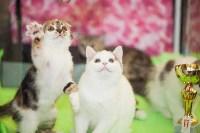 Международная выставка кошек. 16-17 апреля 2016 года, Фото: 36