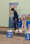 """Выставки собак в ДК """"Косогорец"""", Фото: 2"""