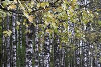 Осень, Фото: 30