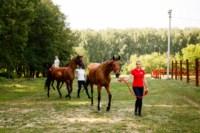 Новые лошади для конной полиции в Центральном парке, Фото: 7