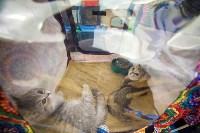 Международная выставка кошек. 16-17 апреля 2016 года, Фото: 44