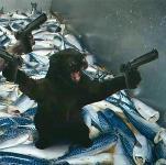 Мартин Скорсезе «Славные парни» (1990), «Таксист» (1976)., Фото: 12