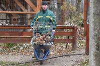 Зимовка зверей в Белоусовском парке, Фото: 1