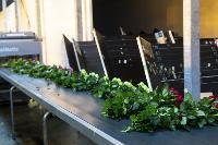 Миллион разных роз: как устроена цветочная теплица, Фото: 53