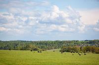 Тишина, солнце и бесконечный простор: 90 красивых фото с родины слонов – Одоевского района, Фото: 52