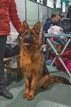 Выставка собак в Туле 26.01, Фото: 61