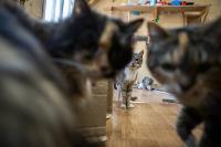 Волонтеры спасли кошек из адской квартиры, Фото: 60