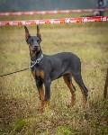 Международная выставка собак, Барсучок. 5.09.2015, Фото: 44